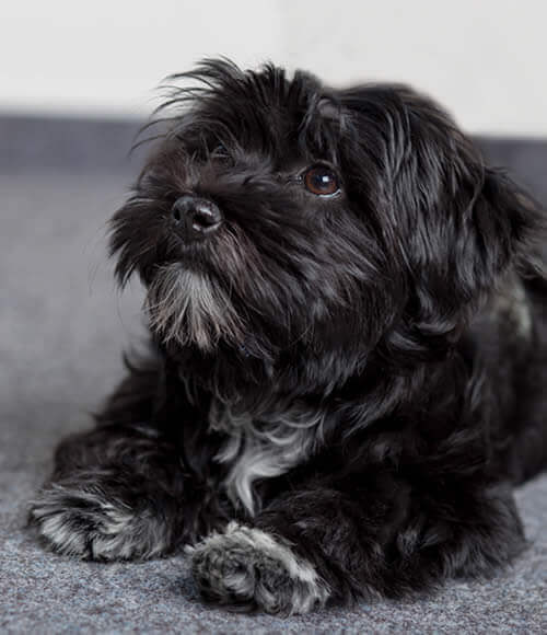 Hundesteuerexpertin Juli